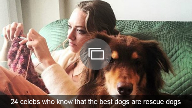 celebs with rescue dogs slideshow
