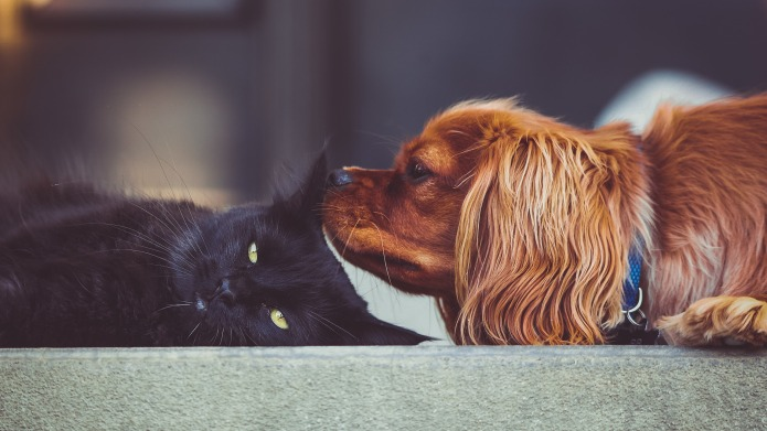 13 reasons all animal owners should
