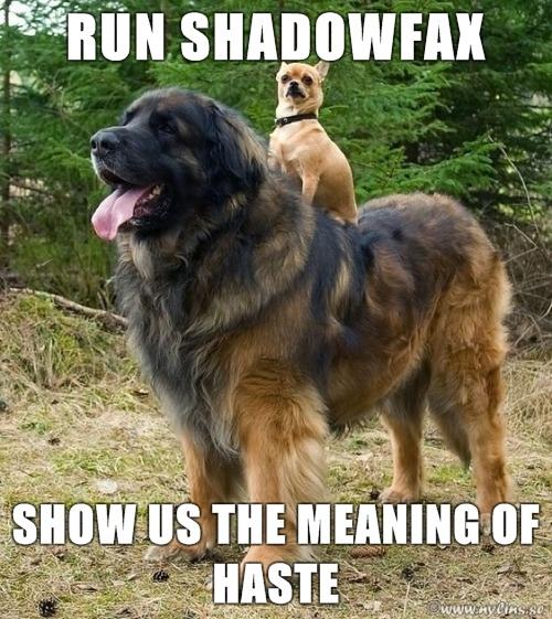 chihuahua standing on big dog's back