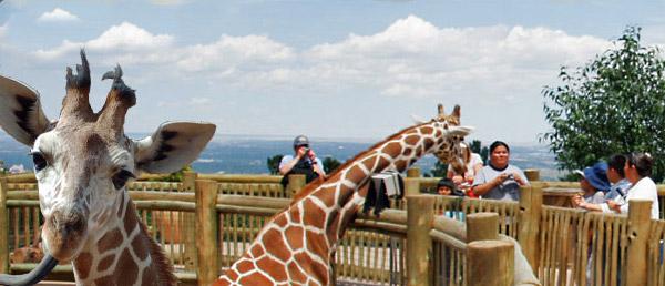 Colorado Zoo