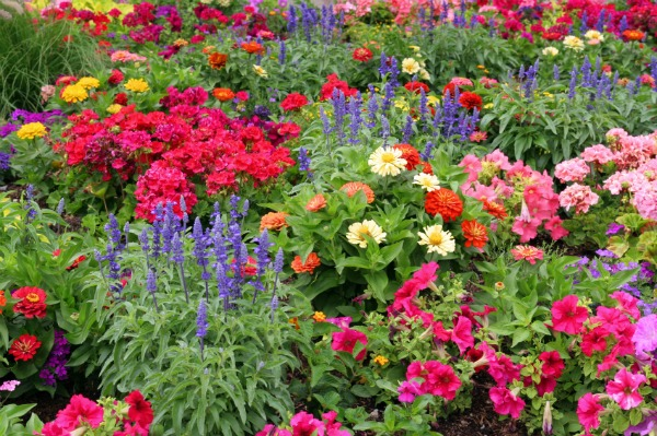 A Guide To Planting Spring Flowers Sheknows