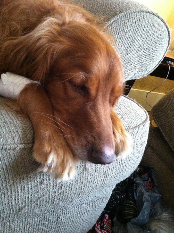 Pet Cancer Corbin Biopsy