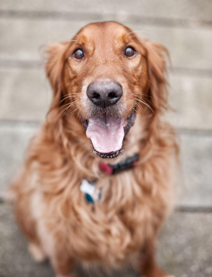 Pet Cancer Corbin Healthy