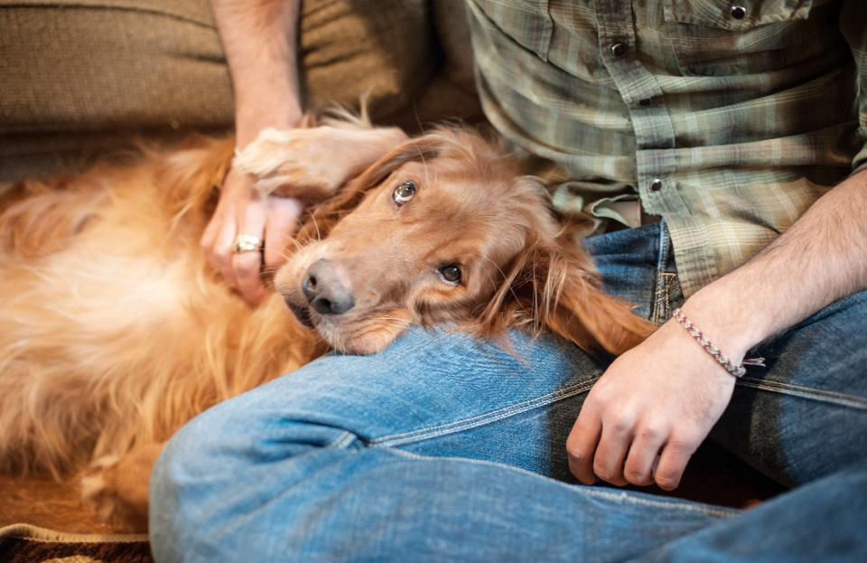 Pet Cancer Cuddles