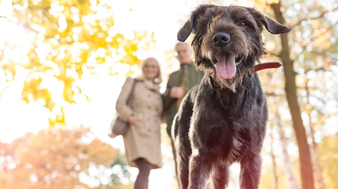Using GPS to track your pet