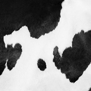 Cow print | Sheknows.com