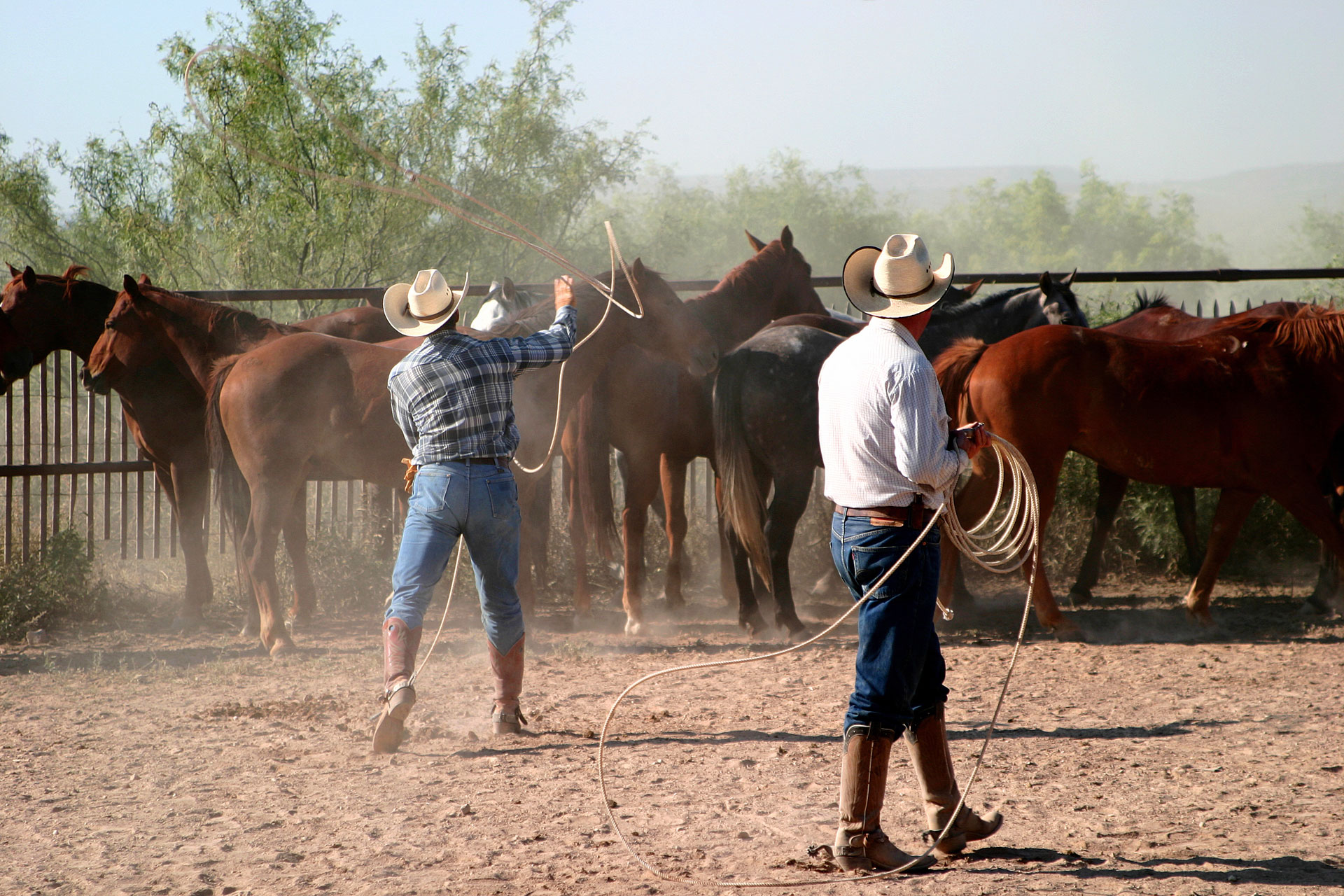 Ride with cowboys