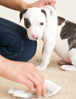 How to get pet urine stains