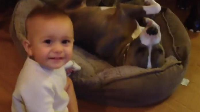 Baby cuddles pit bull to give