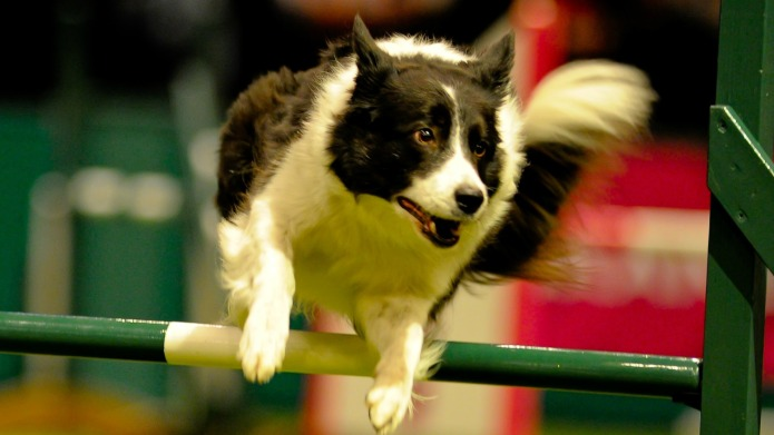 Should you watch Crufts this year?