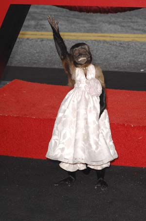 Crystal the Monkey The Hangover 2