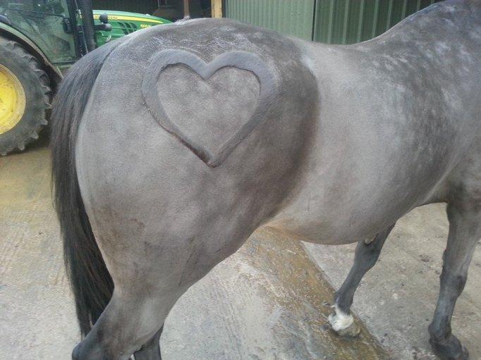 horse haircuts