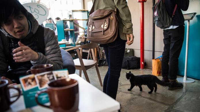 Grab some coffee and adopt a