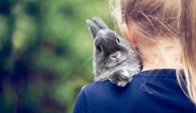 Small rabbit on shoulder of young