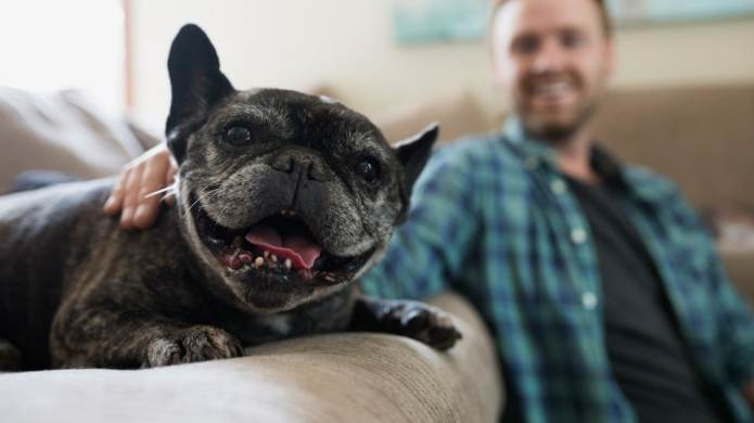 5 Tips to Minimize Your Dog's