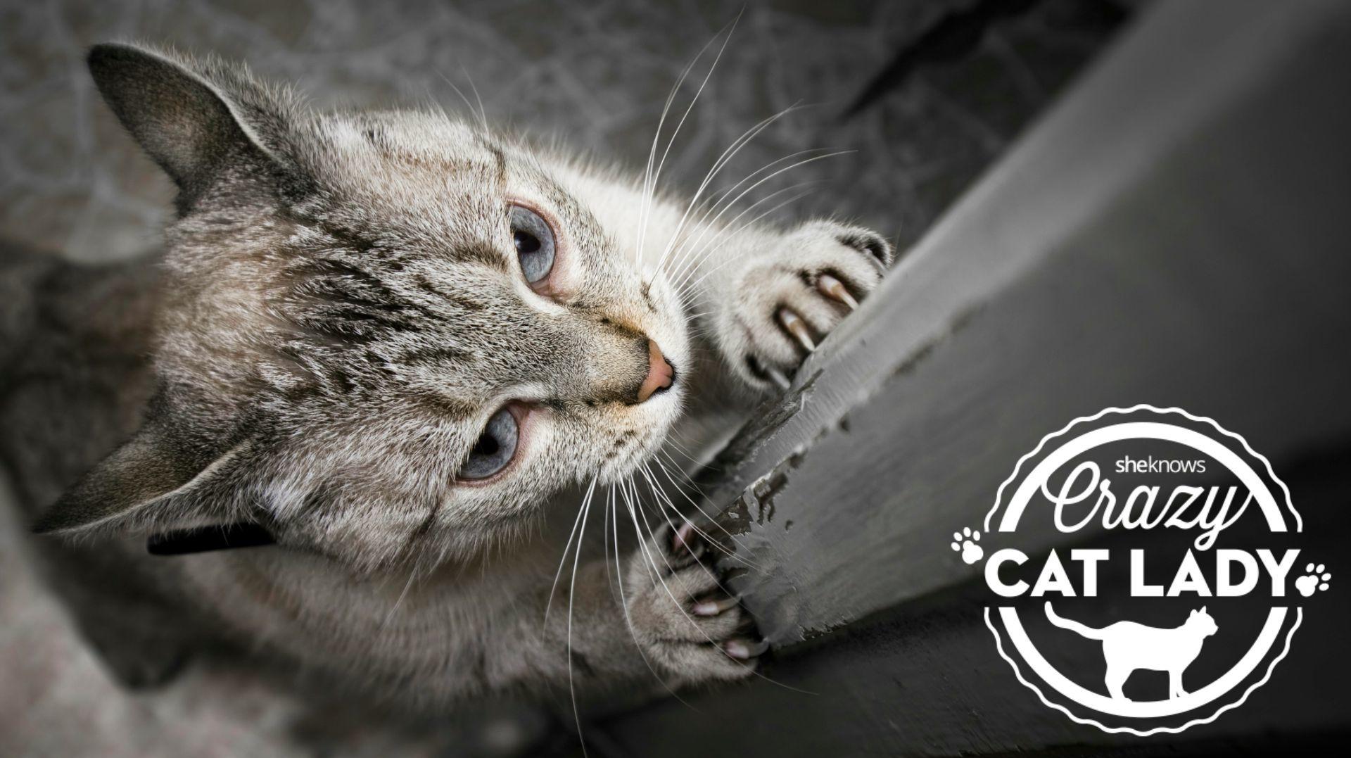Cat Tearing Up Carpet Door Carpet Vidalondon
