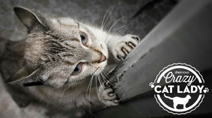 Why your cat won't stop scratching