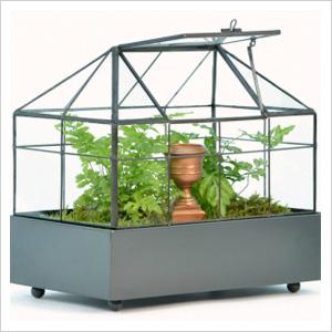 Stylish terrariums that double as decor