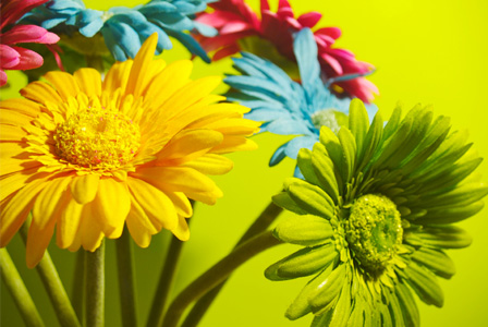 Decorating with neon flowers
