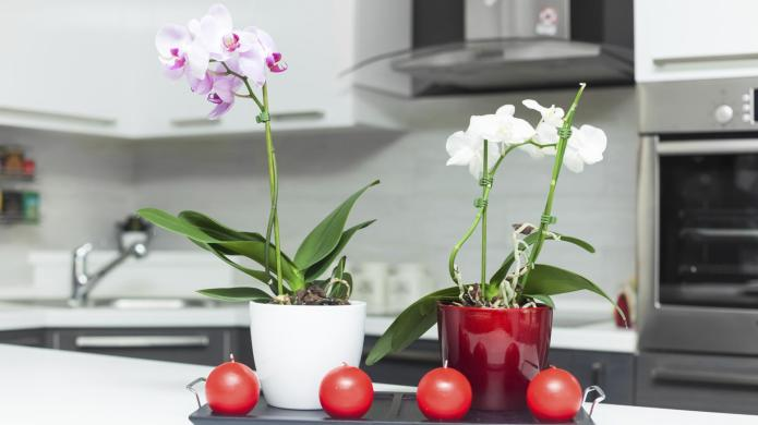 How decorating with red and purple