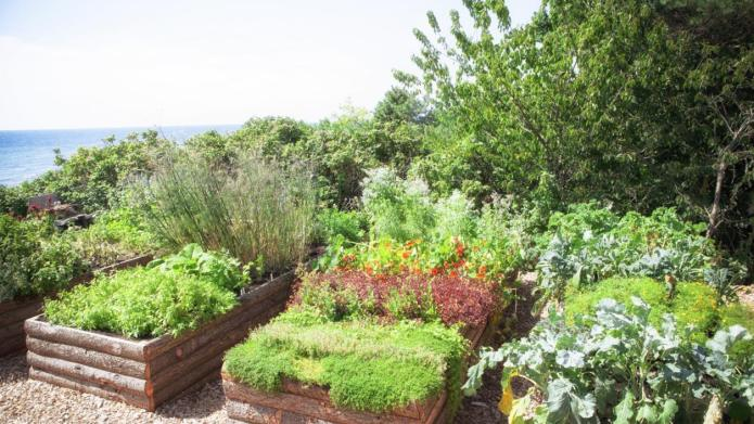 Revitalize your garden with these hidden