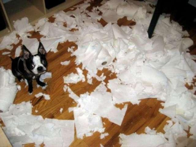 Dog toilet paper