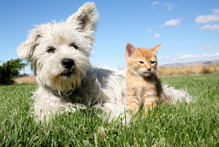 Dog and cat outside