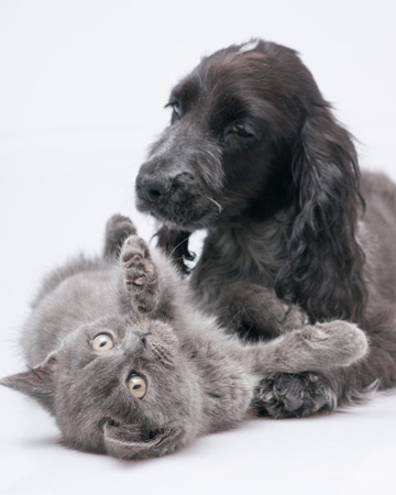 Playful cat and dog together