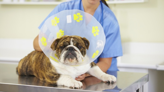 11 Dream jobs for dog lovers