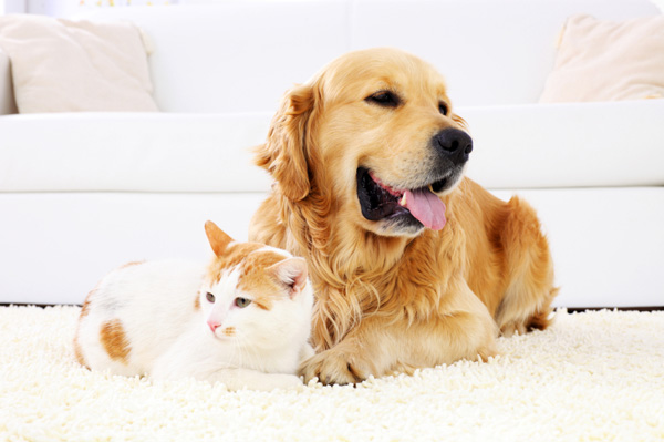 Dog and cat on carpet