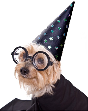 Dog dressed as Harry Potter character