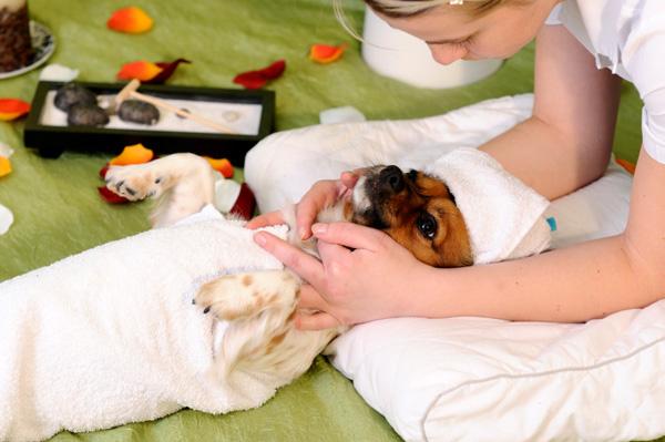 Dog getting massage