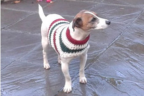 dog in christmas jumper