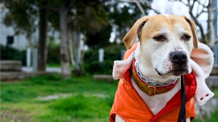 18 Outfits your big dog might