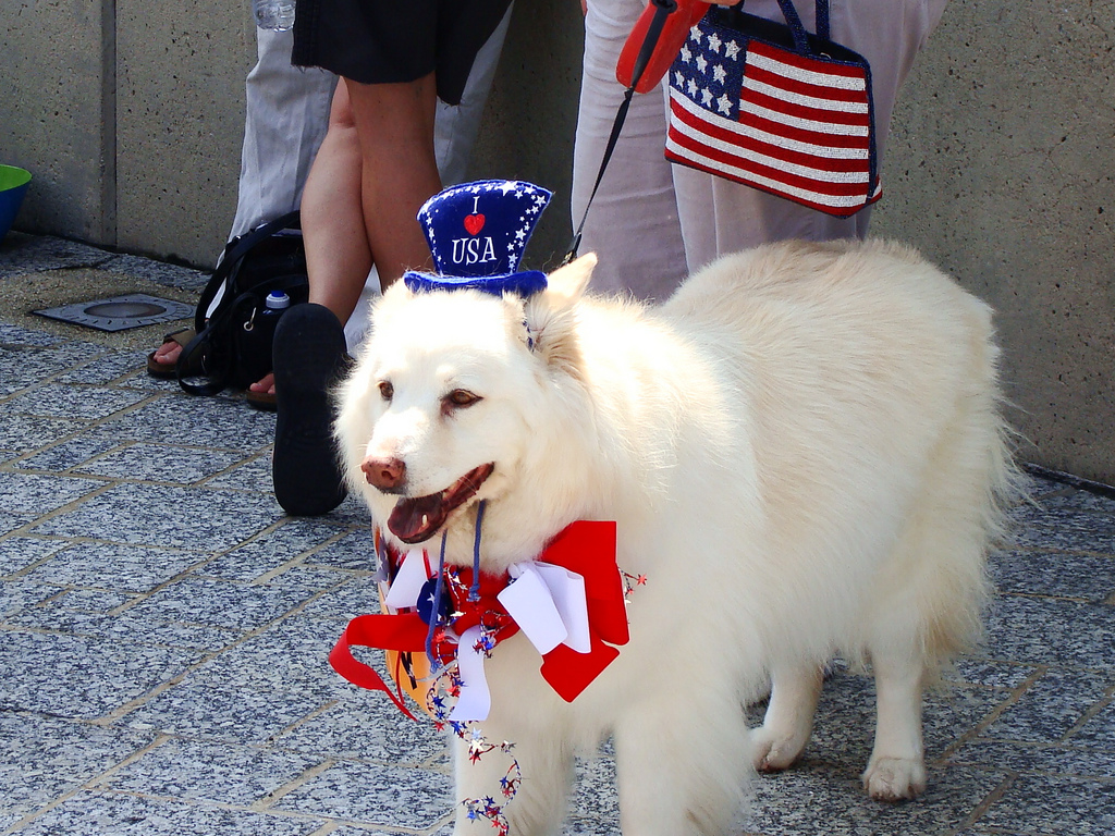 Dog in patriotic hat