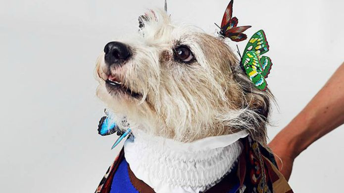 Homeless dogs recreate famous magazine covers