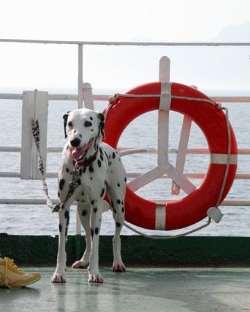 Dog on cruise ship