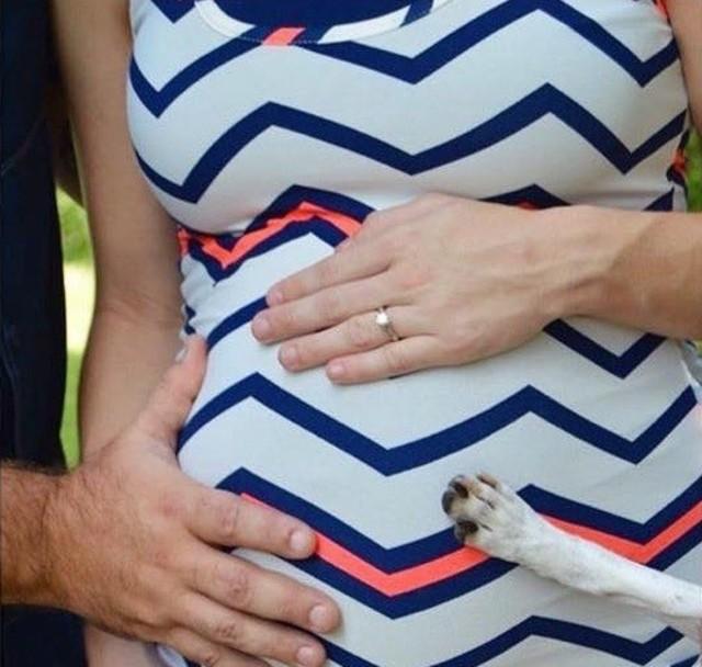 Dog pregnancy photo