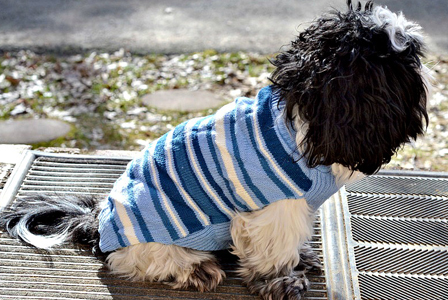 Dog wearing knit sweater