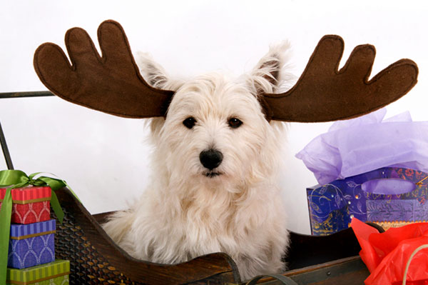 Dog wearing reindeer antlers | Sheknows.com.au