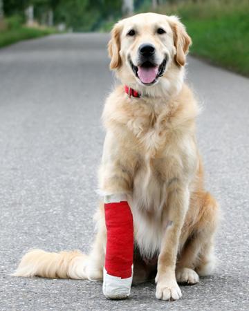 Dog with leg injury