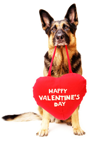 Dog with Valentine's Day Heart