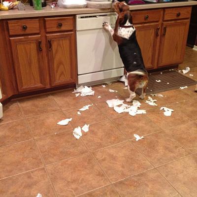 Dog making mess in ktichen