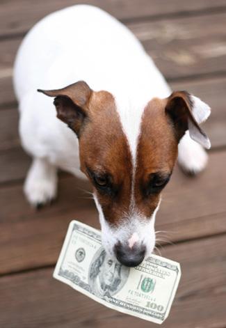 Dogging Holding Money