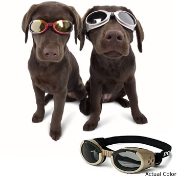 Doggles for big dogs