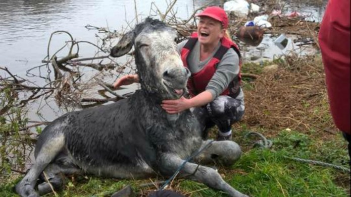 Donkey rescued from floodwaters is safe