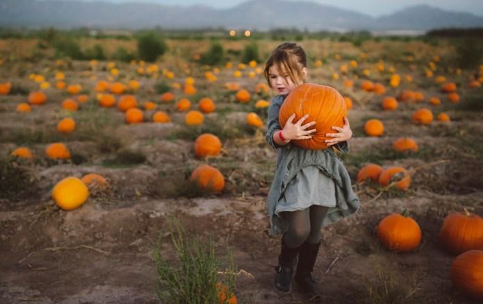 pumpkin patch, girl picking pumpkins, moutains,
