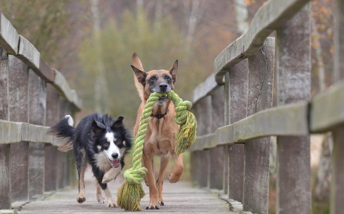 12 dog breeds first-time owners should