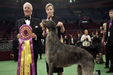 Westminster Dog Show names its Best
