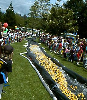 Ducky Derby in Santa Cruz